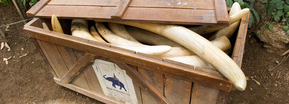 Ausstellung Kaeng Krachan Elefantenpark