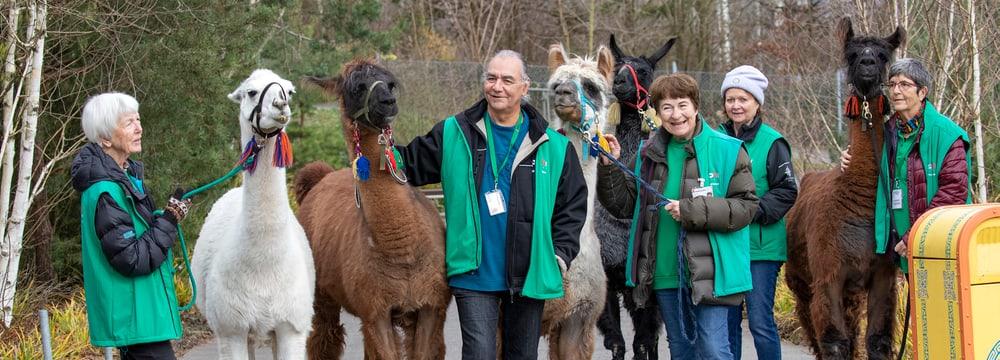 Freiwilligenteam Lamas