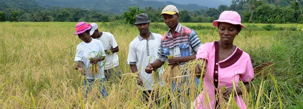 Landwirtschaftsprojekt in Madagaskar.