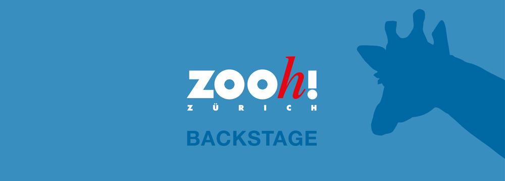Visual Podcast Zoo Zürich Backstage.
