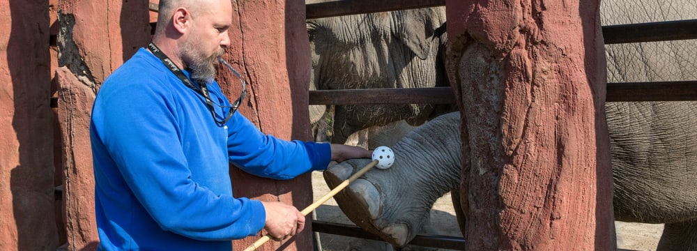 Podcast Headerbild Elefantentraining Kaeng Krachan