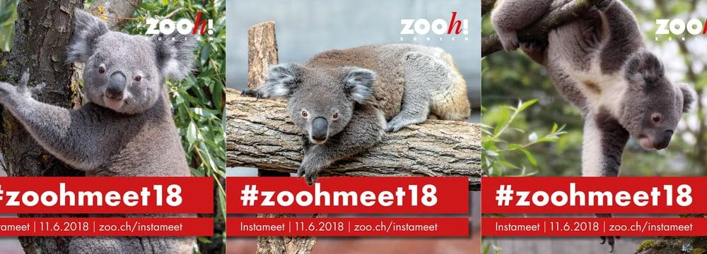 Infogram #zoohmeet18.