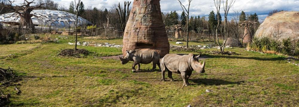 Zoo Zürich, Goran Basic