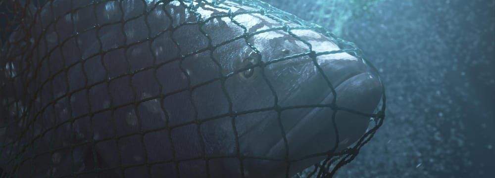 Bild aus dem Dokumentarfilm Sea of Shadows.
