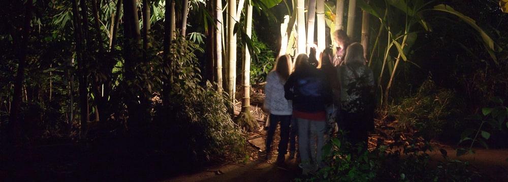 Zooerlebnis Nachtwandeln im Zoo Zürich