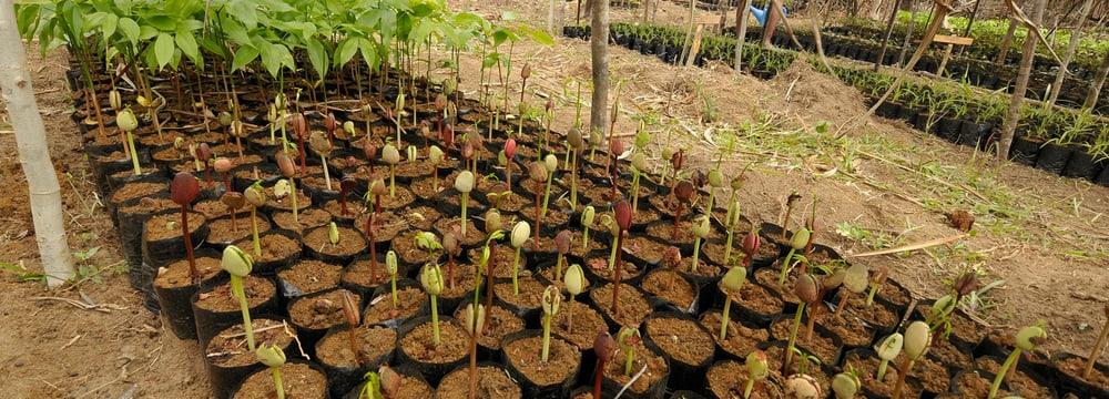 Baumschule zur Aufforstung in Madagaskar.