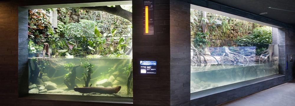 Zitteraal- und Gezeitenbecken im Aquarium im Zoo Zürich.