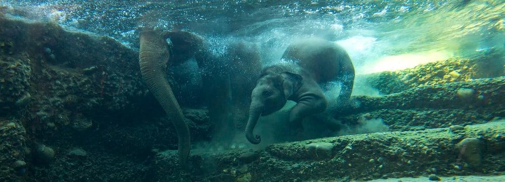 Kaeng Krachan Elefantenpark im Zoo Zürich