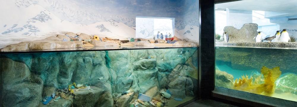 Ausstellung Meeresverschmutzung im Aquarium des Zoo Zürich.