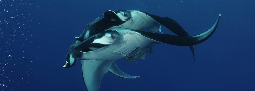 Leadimage Swimmway für Haie
