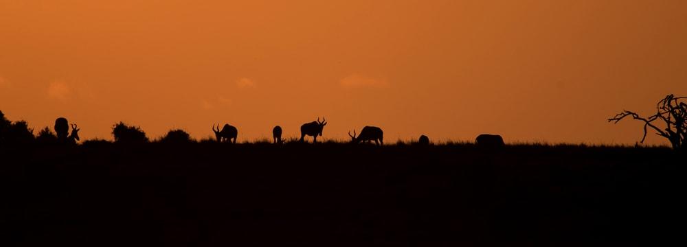 Sonnenuntergang im Lewa Wildlife Conservancy