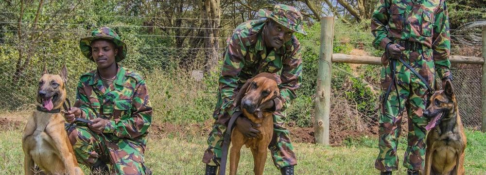 Tracker Dogs mit ihren Hundeführern im Lewa Wildlife Conservancy.