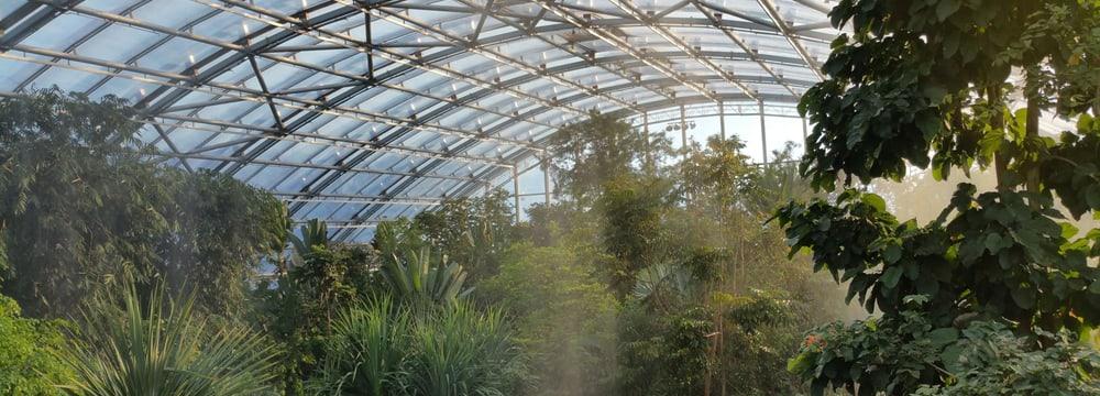 Beregnung im Masoala Regenwald