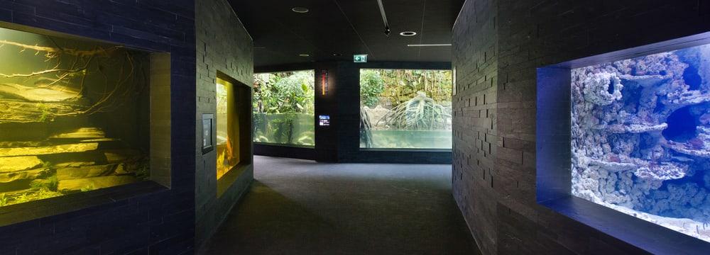 Aquarium im Zoo Zürich.