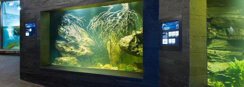Süsswasserbecken im Aquarium im Zoo Zürich.