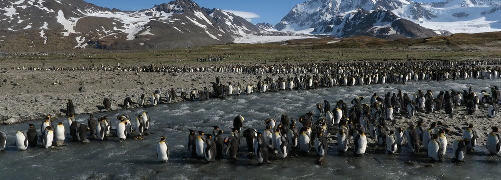 HackZurich Hackathon Pinguine