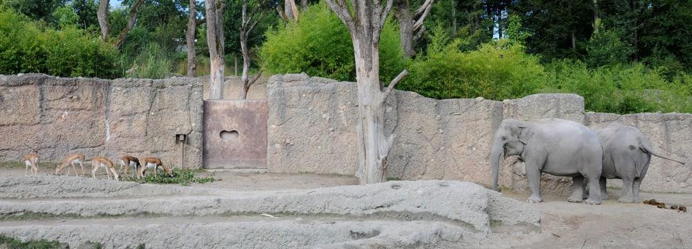 Hirschziegenantilopen und Asiatische Elefanten im Zoo Zürich.