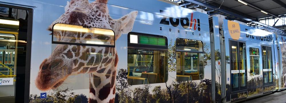 Zoo-Sondertram Lewa Savanne im VBZ-Depot.