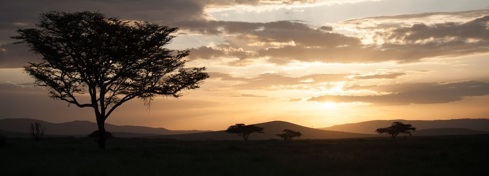 Lewa Wildlife Conservancy in Kenia