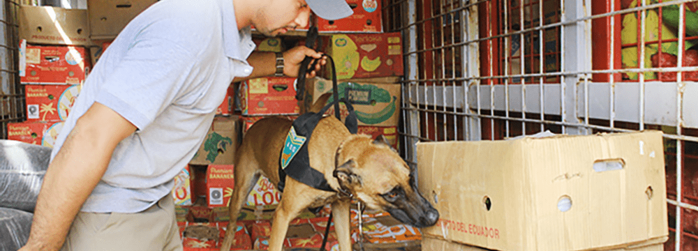 Spürhund inspiziert Ladung