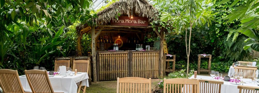 Mora-Mora Bar im Zoo Zürich