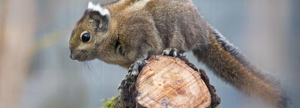 Zoo tiere kennenlernen