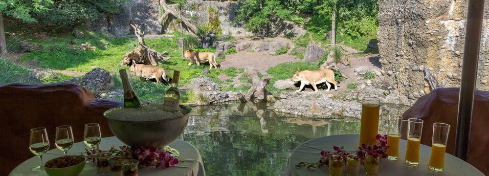 Löwenunterstand im Zoo Zürich