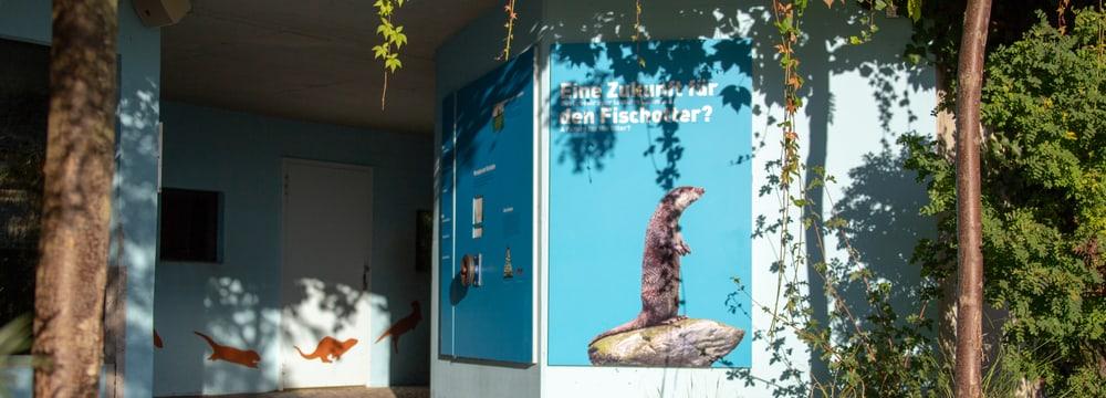 Ausstellung Fischotter im Zoo Zürich.