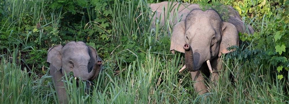 Naturschutzprojekt Kaeng Krachan Headerbild