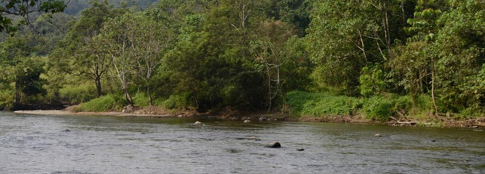 Auswilderungsstation Jantho in Sumatra