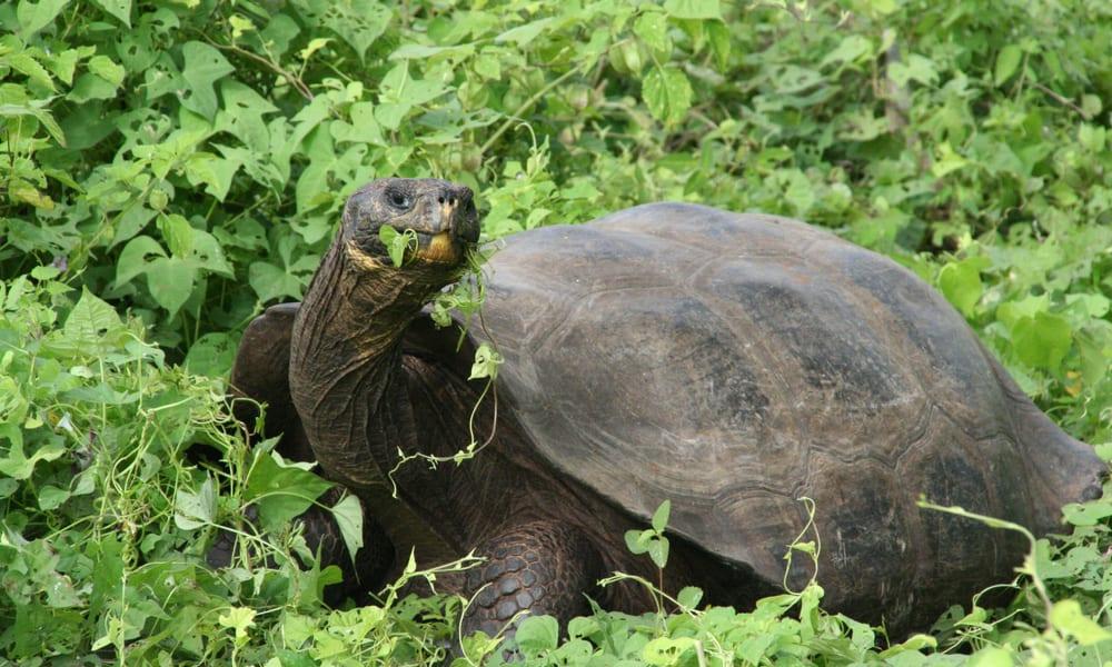 Projektbild Schildkrötengesundheit 2
