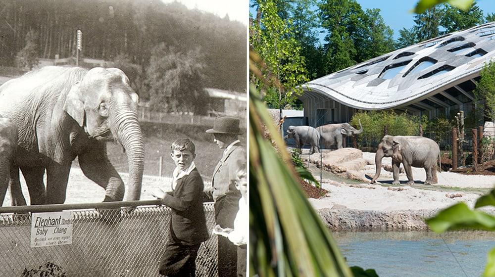 Historische Aufnahme aus dem Zoo Zürich.