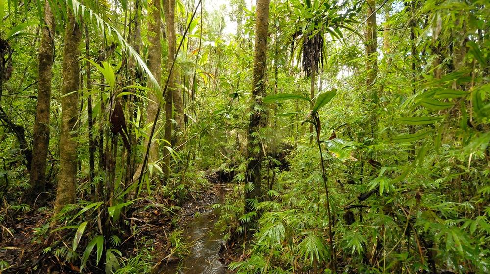 Regenwald im Masoala Nationalpark.