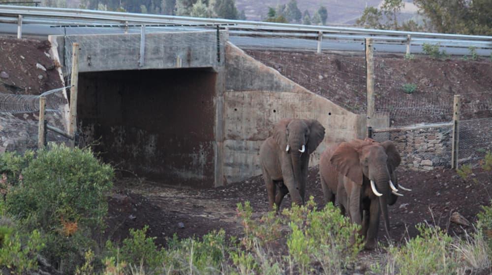 Elefanten-Korridor in Kenia.