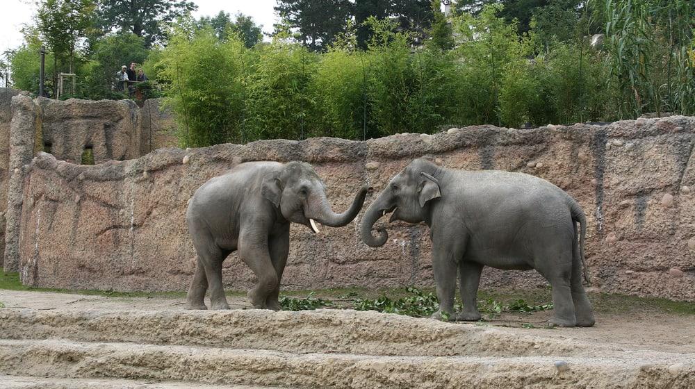 Asiatische Elefanten Farha und Thai im Kaeng Krachan Elefantenpark