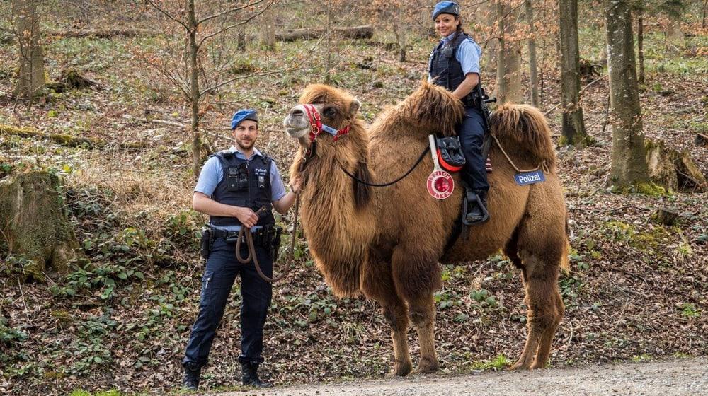 Trampeltier Shamira mit Stadtpolizisten.