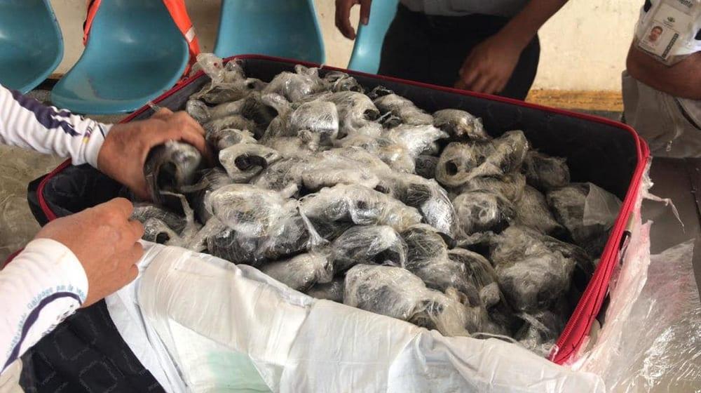 185 Baby-Riesenschildkröten auf Galápagos konfisziert