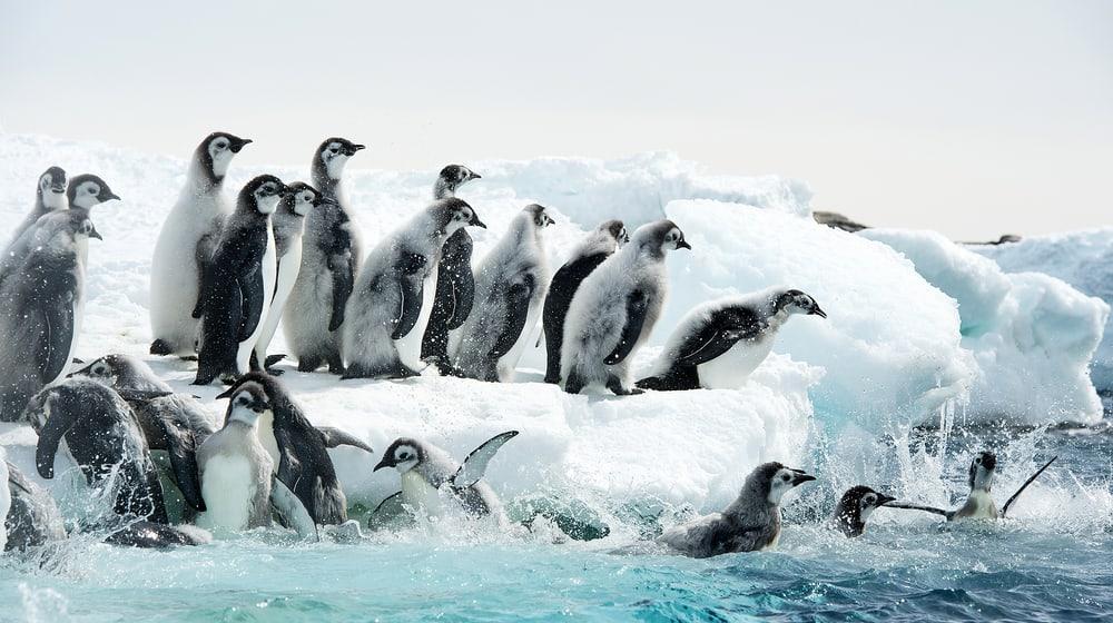 Filmbild «Die Reise der Pinguine 2»