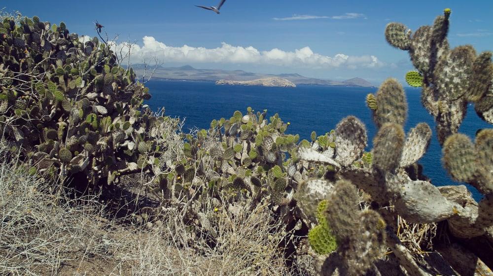 Die Galapagos Inseln
