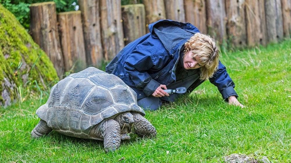 Tierärztin kontrolliert Galapagos-Riesenschildkröte im Zoo Zürich