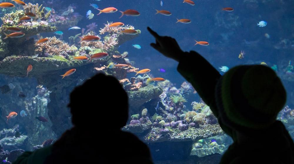 Kinder vor Aquarium im Zoo Zürich
