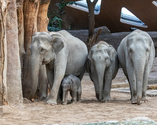 Elefanten_Zoo_Zuerich