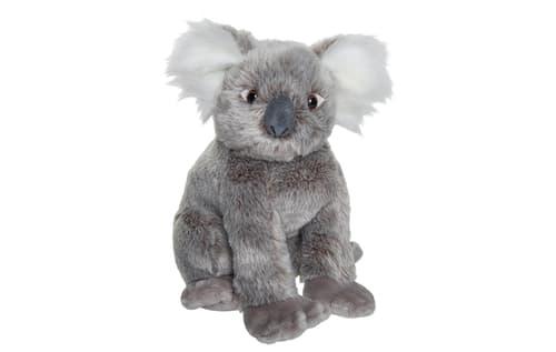 PLAN Koala