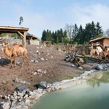 Mongolische Steppe im Zoo Zürich.
