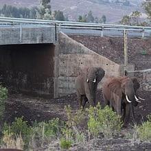 Wildtierkorridor in der Lewa Wildlife Conservancy.