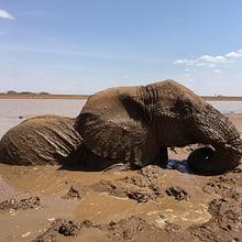 Lewa_Elefantenrettung