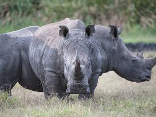 Leadimage Naturschutzprojekt Nashorn Lewa