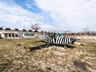 Serengeti-Zebraflugzeug auf dem Lewa Airstrip in der Lewa Savanne im Zoo Zürich.