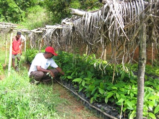 Kakaoprojekt des Vereins Freunde Masoalas.