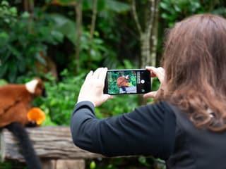 Smartphone-Fotografie im Masoala Regenwald.